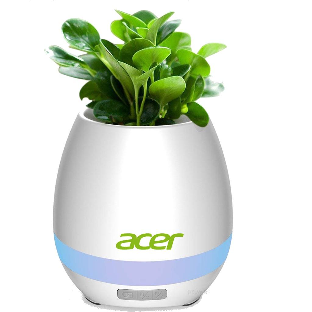 Acer Flower Pot