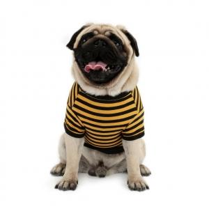 Yellow Stripe Costume