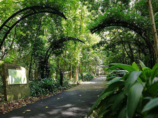 Instagram Worthy Places Singapore Botanic Gardens Nature Trail