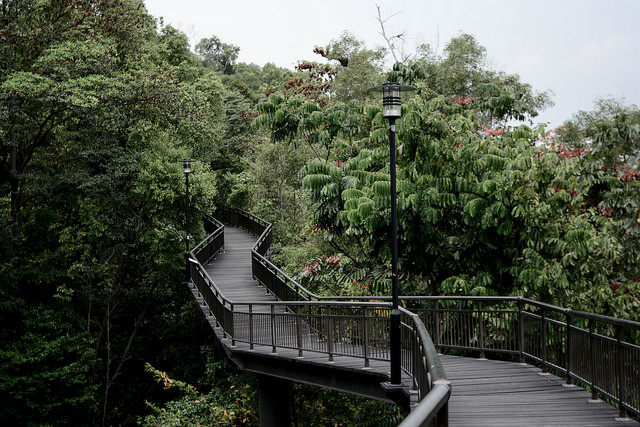 Instagram Worthy Places Singapore Kent Ridge Canopy Walk