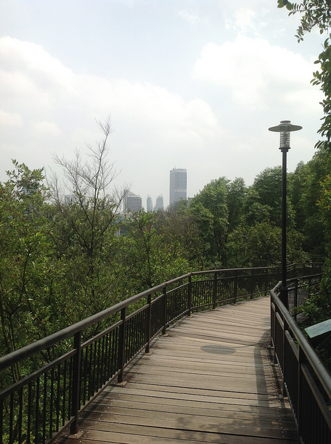 Instagram Worthy Places Singapore Kent Ridge Nature Canopy Walk