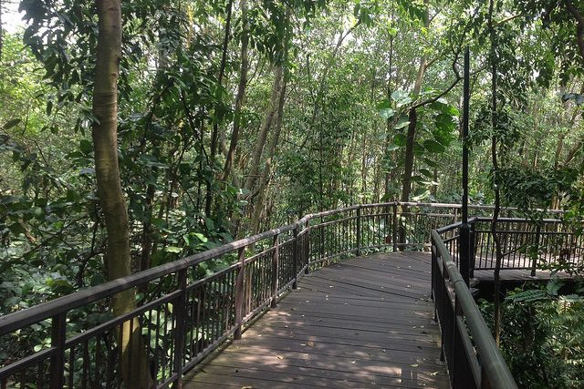Hiking Trails Singapore Kent Ridge Park Canopy Walk