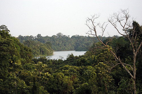 Hiking Trails Singapore MacRitchie Jelutong Tower View