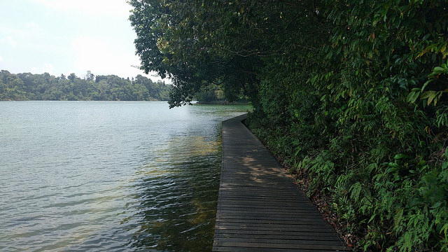 Hiking Trails Singapore MacRitchie Reservoir Boardwalk