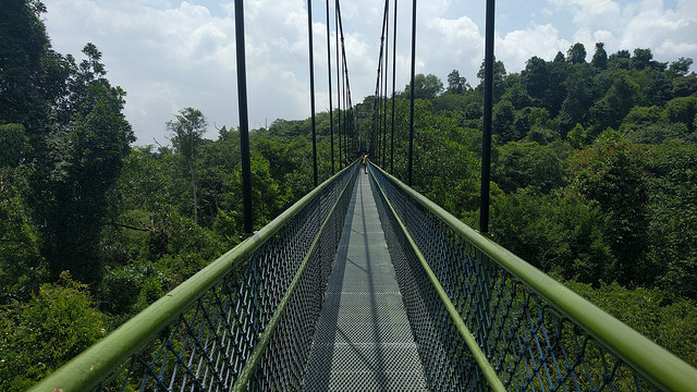 Hiking Trails Singapore MacRitchie Tree Top Walk