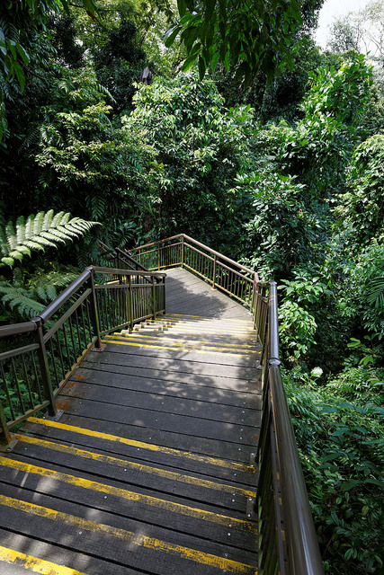 Hiking Trails Singapore Marang Trail