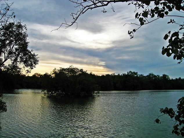 Sungei Buloh Wetland Reserve Sunset Singapore