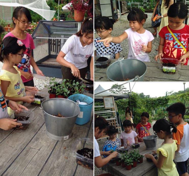 urbanfarm farms n Singapore