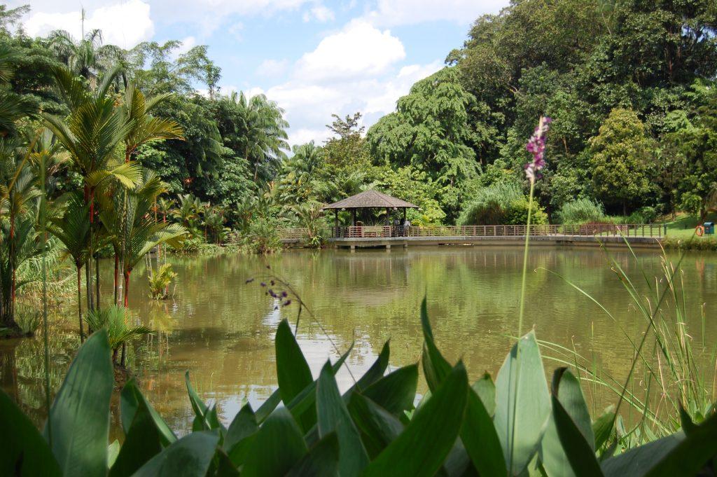 Botanic Gardens Stargazing in Singapore