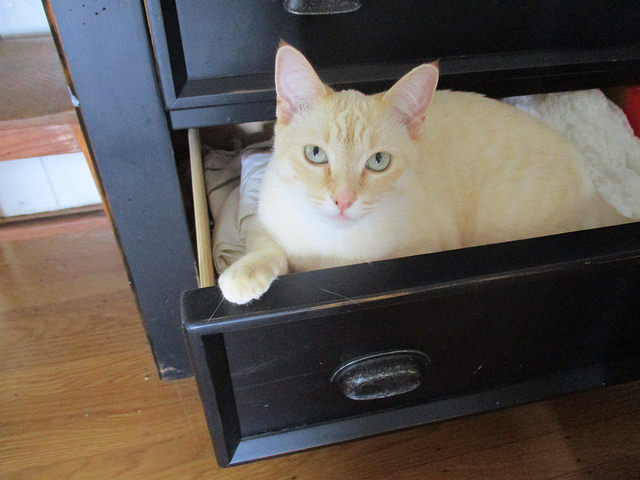 pets at home in drawer