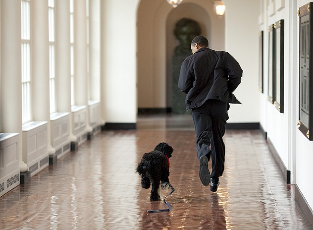 Obama and dog running slippery hallway