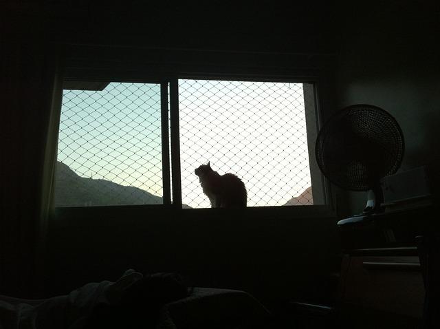 Cat window ledge mesh safety