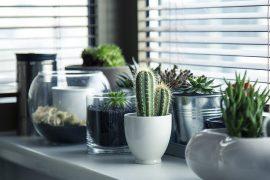 best indoor plants home office decor