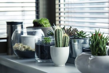 best indoor plants home office decor