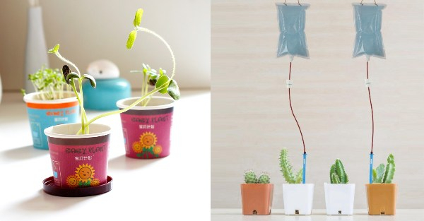 secret santa gift ideas for colleagues green thumb indoor plant office gardening drip device