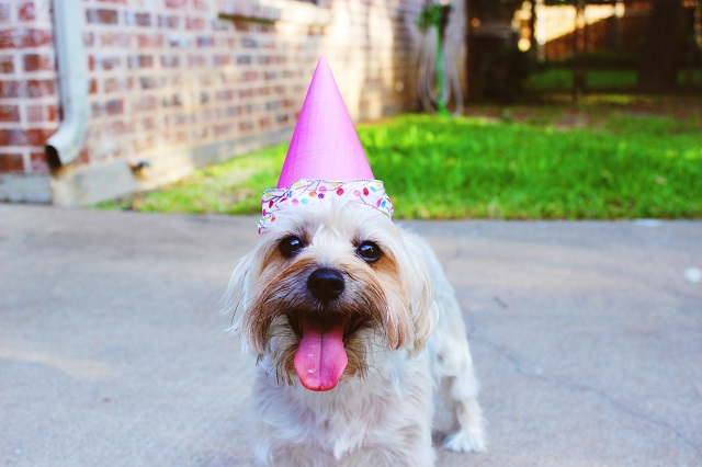 cute dog kids birthday party ideas