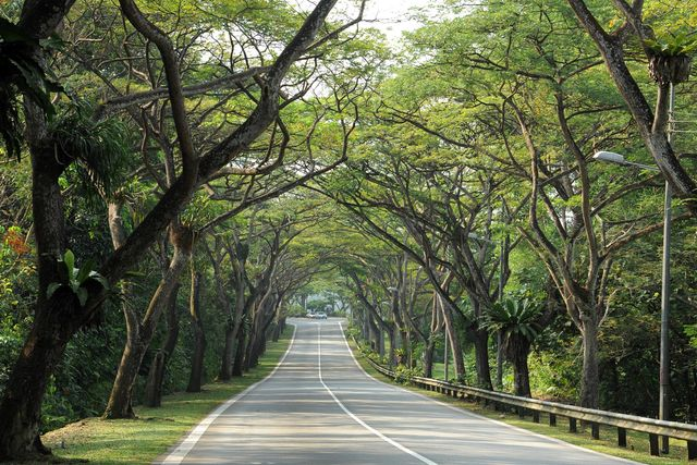 cycling singapore mandai road canopy