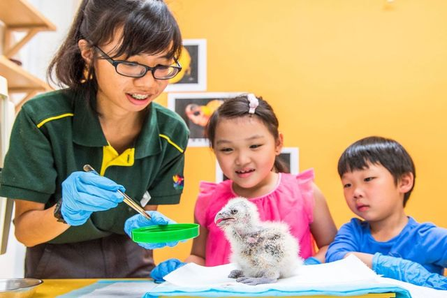 june school holidays activities zoo