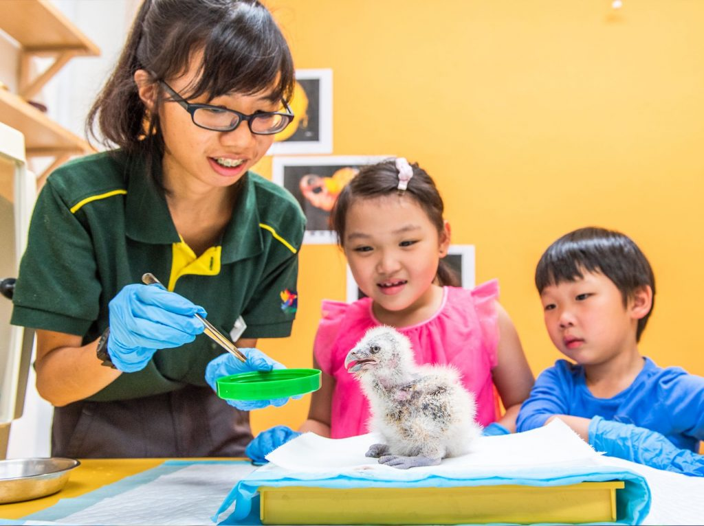 zoo june school holidays 2019