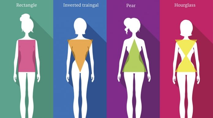 Female body types