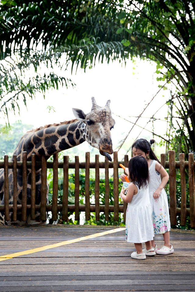 singapore zoo things to do in singapore with kids