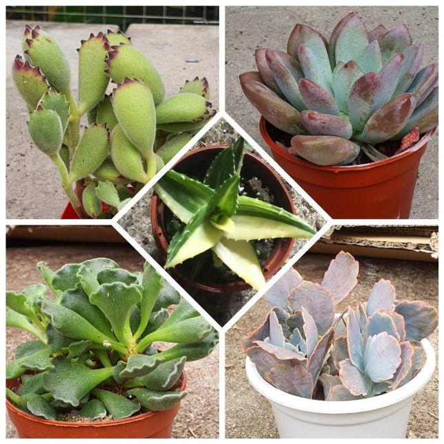 succulent teachers' day gift idea singapore