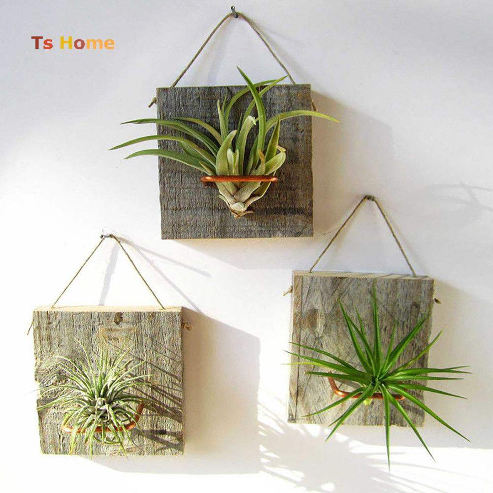 tillandsia plant teacher's day gift ideas singapore
