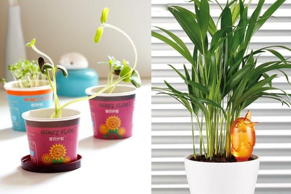 indoor plant secret santa gift ideas