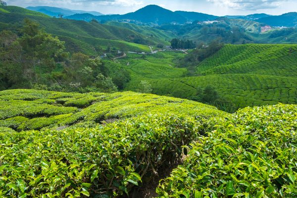 cameron highlands malaysia road trip from singapore
