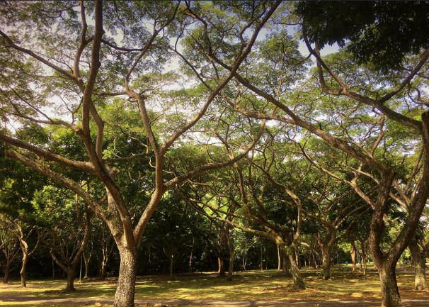 pasir ris park camping in singapore