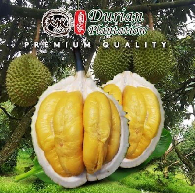 durian plantation delivery singapore