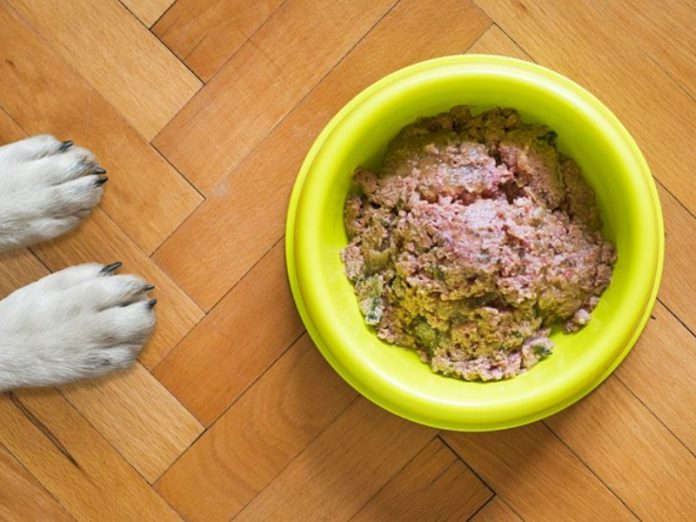 beefy homemade dog cat food recipe pet bowl wet