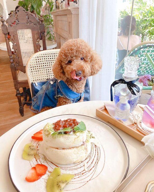 cafe de nicoles flower best souffle pancake singapore
